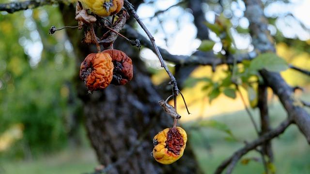 07-Preventing Diseases in Fruit Trees